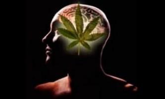Дія марихуани на внутрішні органи
