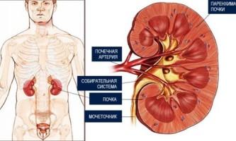 Симптоми і форми гломерулонефриту