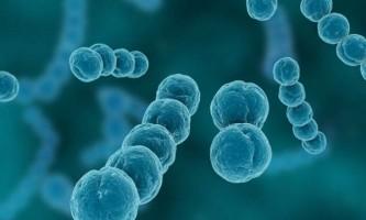 Механізми розвитку, клінічна картина і методи лікування стрептокок пневмонії