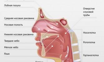 Правобічна пневмонія: особливості клінічних проявів і лікування