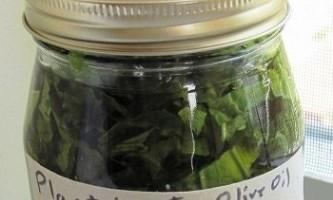 Способи використання соку і листя подорожника від прищів на обличчі і тілі