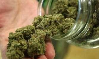 Види і сорти марихуани